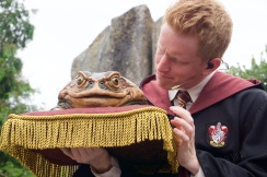 Hogwarts Choir boy checking on his frog.